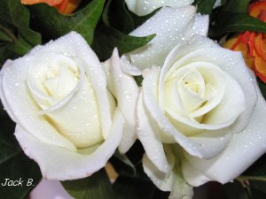 RosesBlanches_S